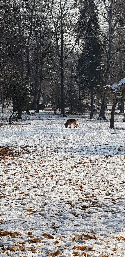 Timo park en hiver