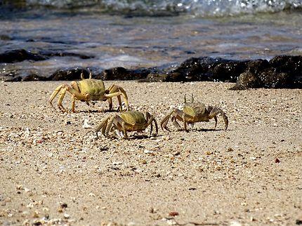 A pas de crabe