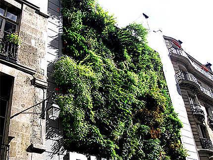 Jardin Suspendu Sur Un Mur Plantes Insolite 4eme