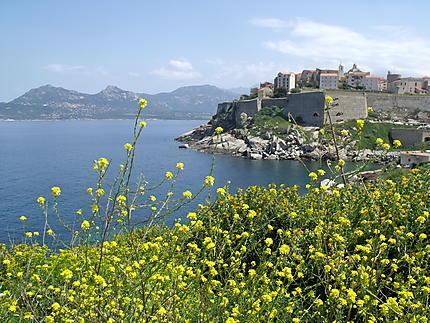 Corse - Calvi