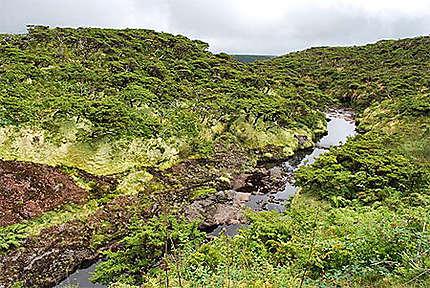 Végétation au nord de la réserve Molto Alto et Pico da Sé