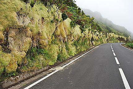 Végétation, en route vers Ponta Delgada