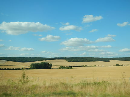 Campagne champenoise