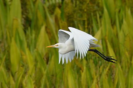 Oiseau au Parc de Ream