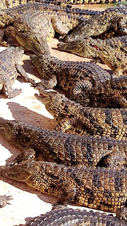 Agadir croco parc