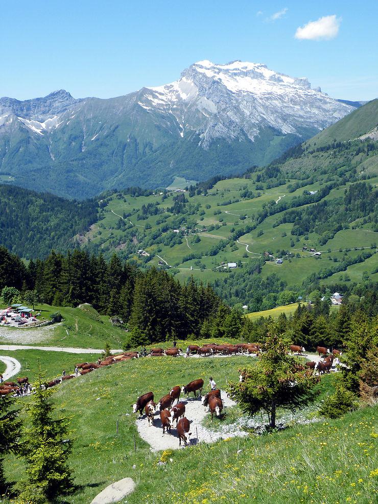 Alpes - Partir à la découverte des fromages de Savoie