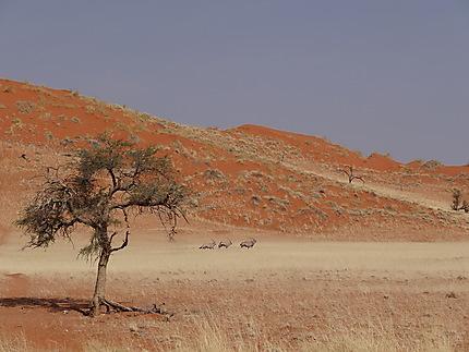 Rencontre magique dans le desert du Namib