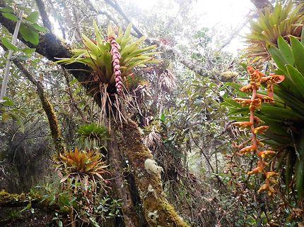 Randonnée à Papallacta 3200 m en Équateur