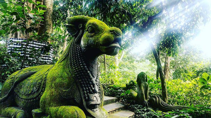 Forêt mystique à Lombok, Indonésie, par fabien66280