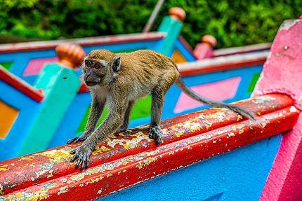 Le singe et la mouche