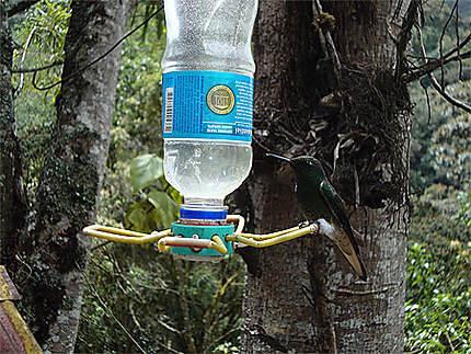 Le colibri et l'eau