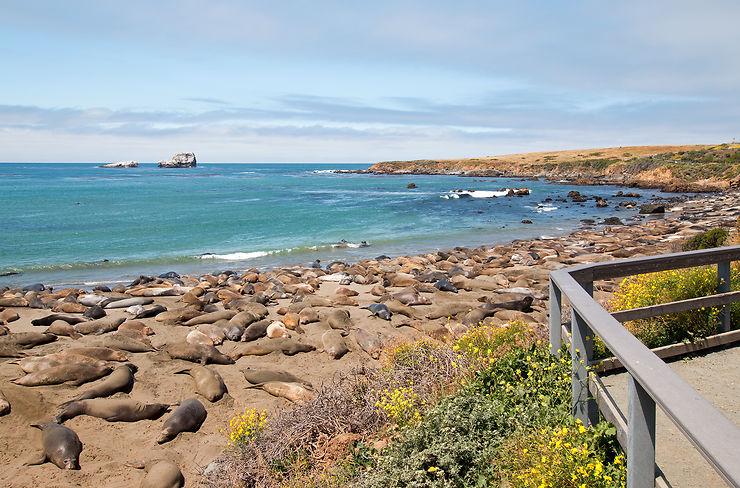 Piedras Blancas et ses éléphants de mer