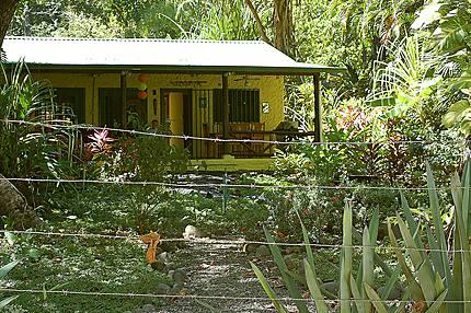 Maison jaune dans la jungle