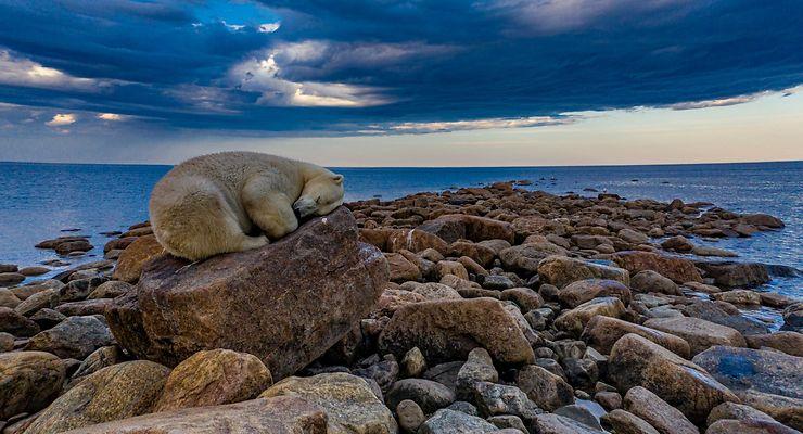 Repos de l'ours polaire, Churchill, Canada