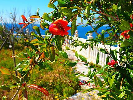 Fleur à Adra