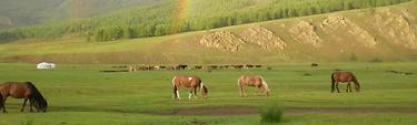 Bon Plan Vol: Mongolie