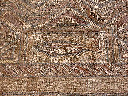 Chypre poisson