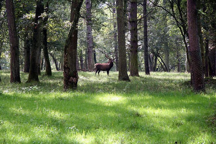 Si vous aimez la forêt et les animaux…