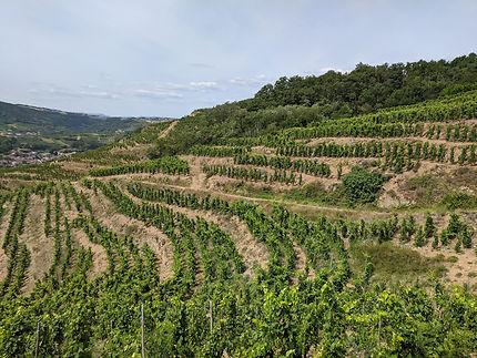 Vignes étagées à Saint-Désirat