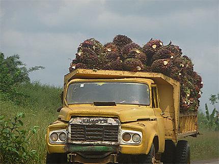 Transport des noix de palme