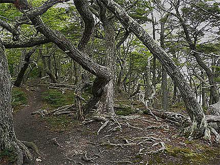 Forêt du Bout du Monde
