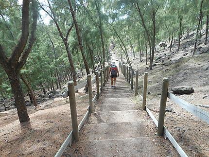 Chemin de randonnées