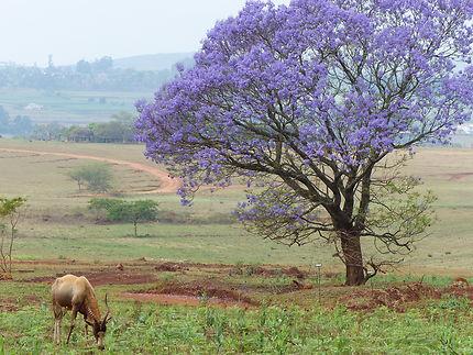 Mlilwane National Park