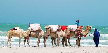 Découvrez Djerba, une des merveilles de la Tunisie, à partir de 236€ !