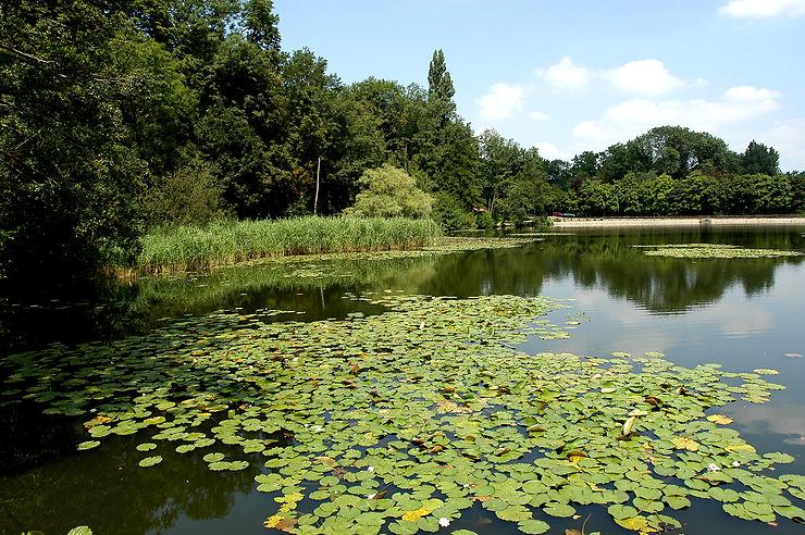 Les étangs de l'Impératrice - Hauts-de-Seine, Île-de-France