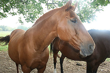 Un cheval à Newport