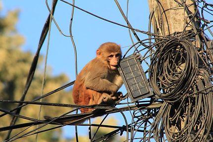 La nouvelle génération de techniciens Telecom