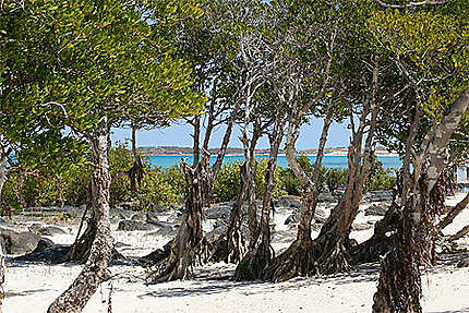 Jogolo beach