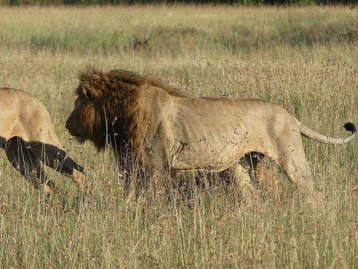 cout safari kenya