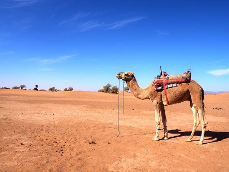 voyage maroc 3 semaines