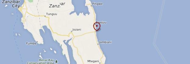 Carte Paje - Zanzibar